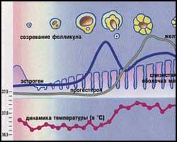 Аменорея, лечение аменореи, аменорея лечение, лекарства от аменореи, средства от аменореи, как лечить аменорею, аменорея реферат, аменорея статья, аменорея лечение в киеве, аменорея лечение народное, аменорея лечение травами, аменорея лечение иглами, аменорея лечение рефлексотерапией, аменорея лечение лазером, аменорея лечение пчелами, аменорея лечение магнитом, аменорея лечение ультразвуком, аменорея лечение ароматерапией, аменорея лечение пчелиным ядом, аменорея первичная, аменорея вторичная. Киев