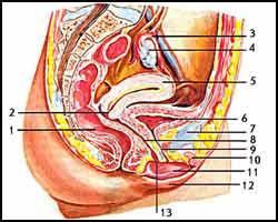 Гипоменорея, гипоменорея лечение, лечение гипоменореи, лекарства от гипоменореи, средства от гипоменореи, гипоменорея реферат, как лечить гипоменорею, гипоменорея лечение травами, гипоменорея лечение народное, гипоменорея лечение пчелами, гипоменорея лечение иглами, гипоменорея лечение лазером, гипоменорея лечение магнитом, гипоменорея лечение ультразвуком, гипоменорея лечение рефлексотерапией, гипоменорея лечение спринцеваниями, гипоменорея лечение аромамаслами, скудные месячные. Киев