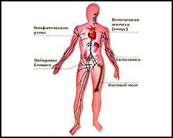 Истощение иммунной системы, стимуляция иммунной системы, корекция иммунной системы, истощение иммунитета, чем стимулировать иммунную систему, стимуляция иммунной системы в киеве, истощение иммунитета болезнями, разрушение иммунитета болезнями, как стимулировать иммунитет, средства для стимуляции иммунитета, стимуляция иммунитета, иммунитет стимуляция, иммуносупрессивные заболевания, лечение иммуносупрессивных заболеваний, как лечить истощение иммунной системы. Киев