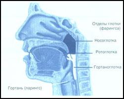 Ларингит, лечение ларингита, ларингит лечение, лекарства от ларингита, средства от ларингита, ларингит лечение лазером, ларингит лечение кварцем, ларингит лечение народное, ларингит лечение травами, ларингит лечение иглами, ларингит лечение рефлексотерапией, ларингит лечение аромамаслами, чем лечить ларингит, как лечить ларингит, ларингит новое в лечении, ларингит острый, ларингит хронический, ларингит катаральный, ларингит фолликулярный, ларингит подскладочный, ларингит подслизистый, ларингит узелковый