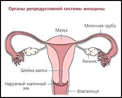 Оофорит, лечение оофорита, лечение оофорита в киеве, оофорит лечение, лекарства от оофорита, средства от оофорита, как лечить оофорит, оофорит лечение народное, оофорит лечение травами, оофорит лечение пчелами, оофорит лечение пчелиным ядом, оофорит лечение иглами, оофорит лечение рефлексотерапией, оофорит лечение ультразвуком, оофорит лечение магнитом, оофорит лечение физиотерапией, оофорит лечение мазями, оофорит лечение спринцеваниями, оофорит лечение ароматерапией, оофорит лечить эффективно. Киев