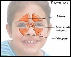 Синусит, лечение синусита, синусит лечение, лекарства от синусита, средства от синусита, как лечить синусит, чем лечить синусит, синусит лечение лазером, синусит лечение травами, синусит лечение народное, синусит лечение иглами, синусит лечение аромамаслами, синусит лечение физиотерапией, синусит лечение ультразвуком, синусит лечение кварцем, синусит лечение магнитом, синусит новое в лечении, синусит вазомоторный, синусит острый, синусит хронический, синусит верхнечелюстной, синусит параназальный. Киев